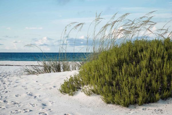 Santa Rosa Beach Florida Home Inspections